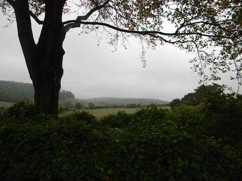 Trees and view