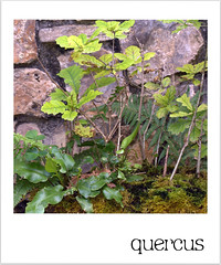 Del jardín botánico de Gijón