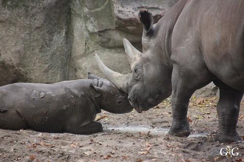 Mama Ine mit Akili