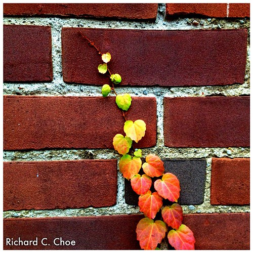 Autumn leaves (10.24, '12) by rchoephoto