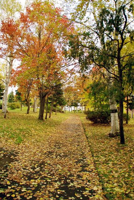 色づく散歩道2