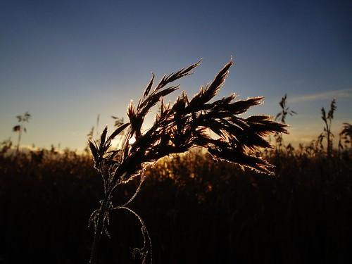 morning autumn sun sunlight fall nature finland helsinki frost natural conservation arabia area viikki protection viikinranta