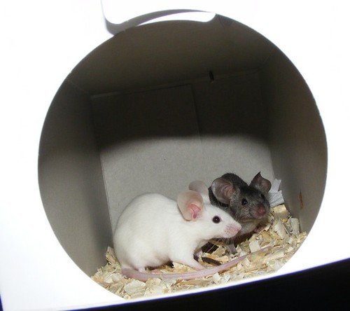 Our two new mice!