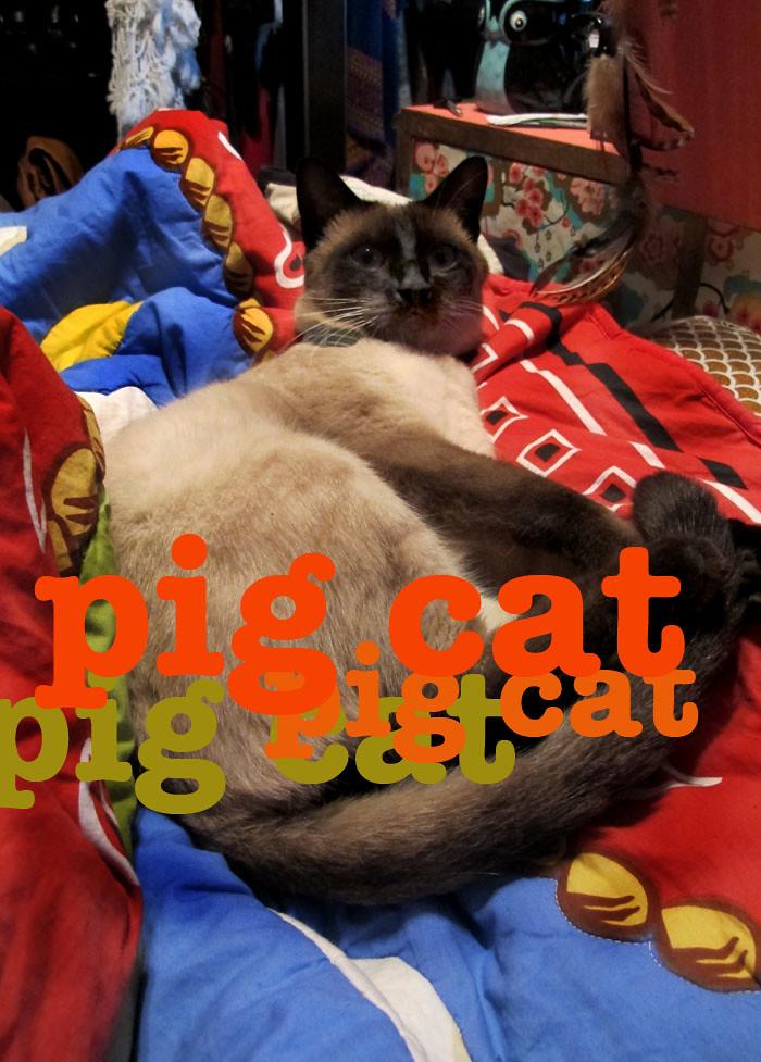 ---aaa-pigcat