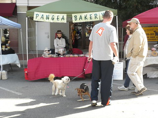 bakery and dogs