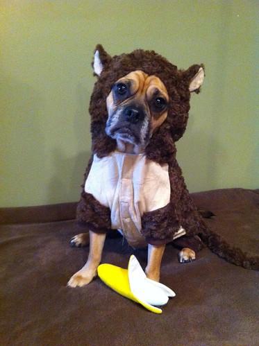 Funny monkey, Monkey Dog Costume