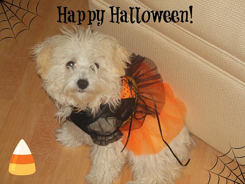 Sophie Halloween