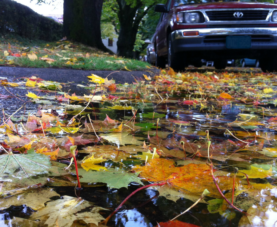 autumn_leaves_truck_street_IMG_0915