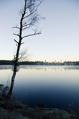morning trees sky mist lake reflection tree water fog sunrise sweden swedish shore birch fritsla furusjön