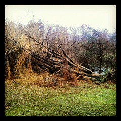 #Sandy #damage Beeatch took out both #weepingwillow #trees #sad #angry #ugh #backyard #newhampshire