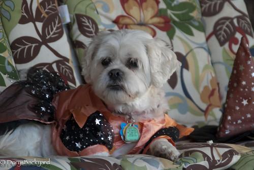 20121031-Halloween-5