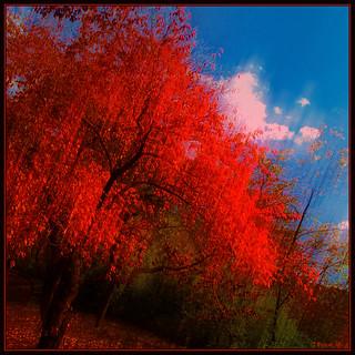 Red Tree Blue Sky