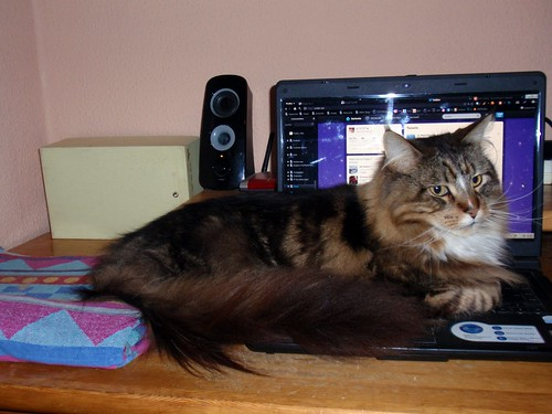 Kater Adonis ganz auf Laptop