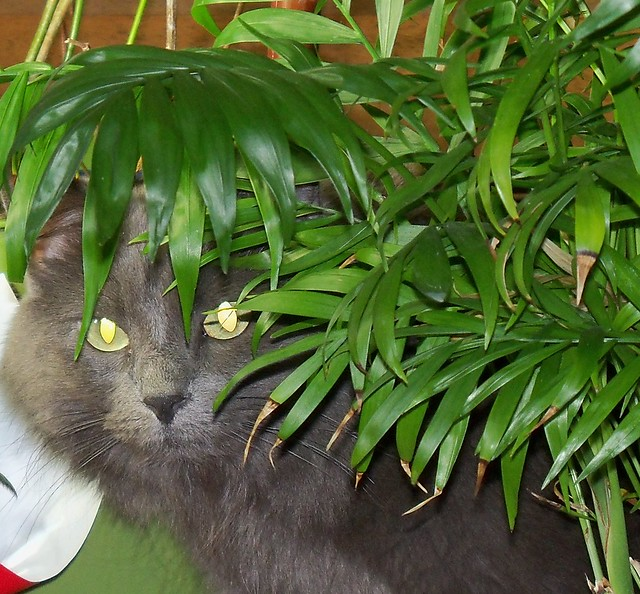 Jungle Kitty