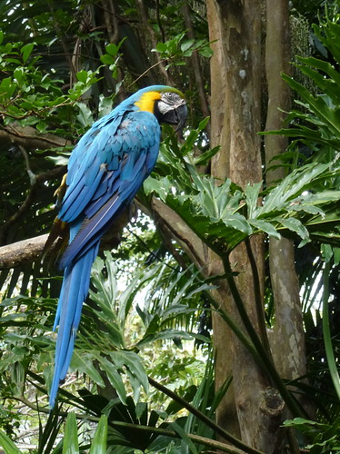 Zoo Ave - macaw