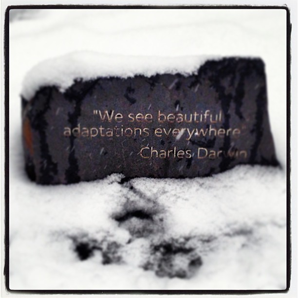 We see beautiful adaptations everywhere': Charles Darwin quote on a ...