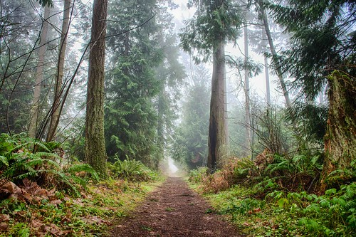Our Forest in Puyallup, Washington