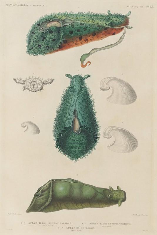 Voyage de la Corvette (atlas) by Jules Dumont d'Urville, 1833 53