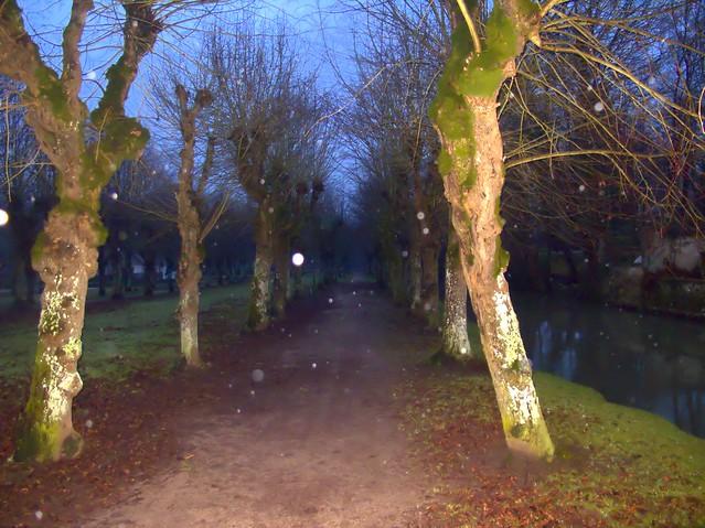 rainy path at night