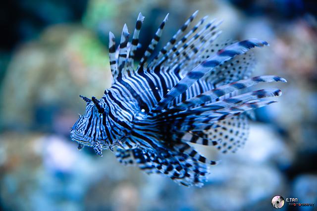S.E.A Aquarium - 012