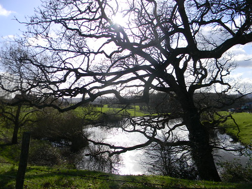 Tree by pond - near start