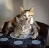 Nos petits chatons