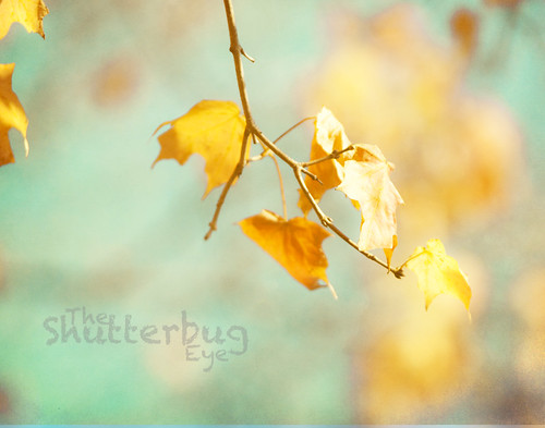 Colors of fall by The Shutterbug Eye™