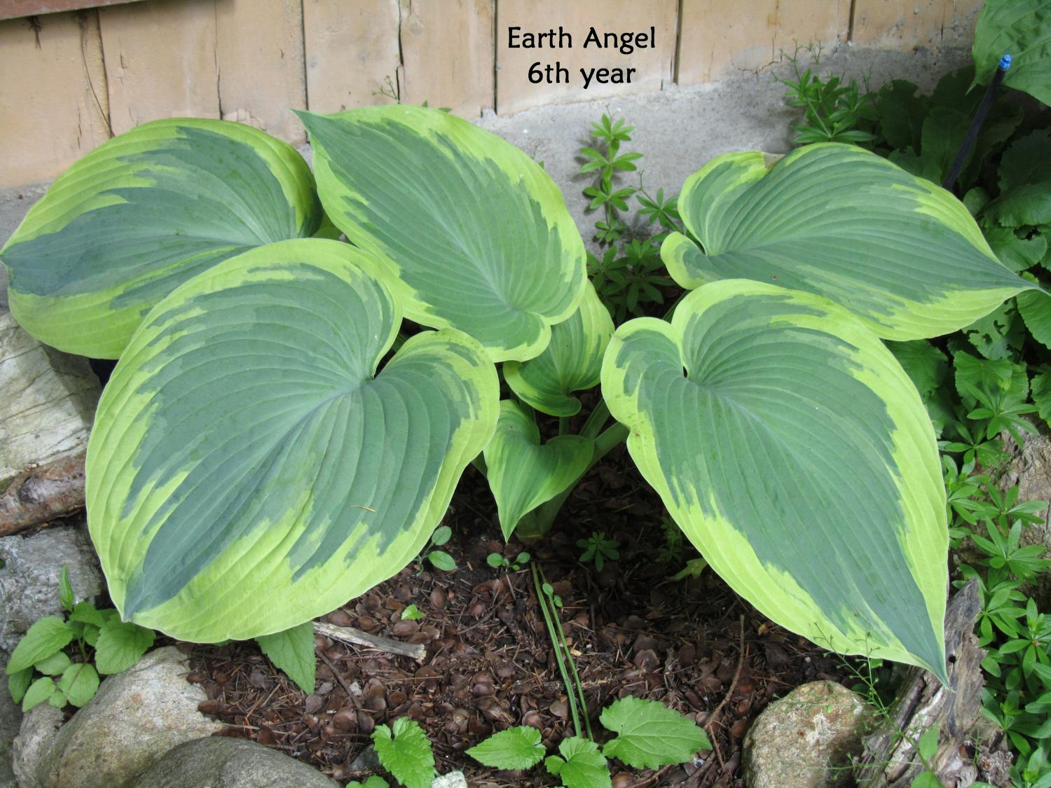 Earth Angel 6-13-12 (311)