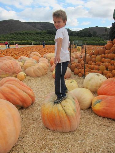 Ezra on the big pumpkin