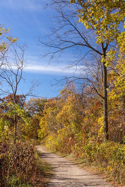 Autumn Trail ©2012 Bo Mackison