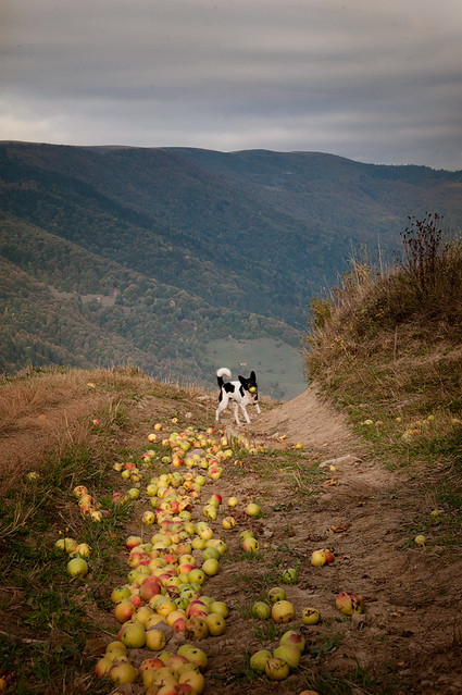 Karpaty, Ukraine; Father of Apples