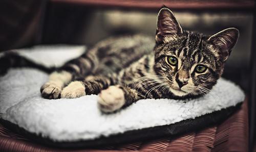 [フリー画像素材] 動物 1, 猫・ネコ, 子猫・小猫 ID:201210181600