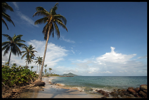 sea palmtrees caribbean stkitts nevis westindies coconutpalms leewardislands lesserantilles nisbetplantationandbeachclub