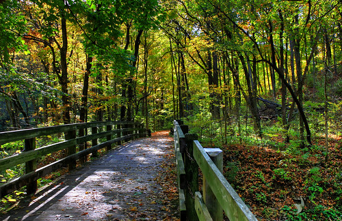 bridge autumn trees ohio sun sunlight green fall sunshine yellow creek woodland woods shadows cincinnati hills gorge railing sharonwoods