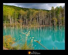 Aoike (Blue Pond) I