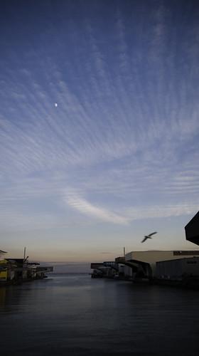 Moon Seagull Twilight Waltz Over Tokyo Bay