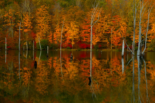 statepark longexposure autumn trees fall nature leaves forest reflections landscape dead outdoors mirror evening newjersey october scenery colorful view atmosphere foliage longpondironworks