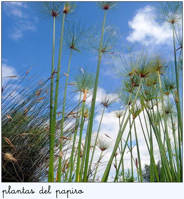 En el jard n bot nico de gij n plantas del papiro by for El jardin botanico gijon