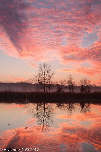 mist fog sunrise illinois pond preserves lakecounty foggyscenes halfdayforestpreserve halfdaypond