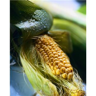 8137211387 28ee1a6937 o Why Preppers Should Be Concerned About GMO Crops   Backdoor Survival
