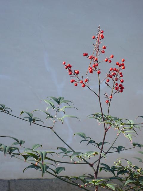Япония. Цветок на стене
