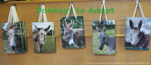Donkeys for Adoption at the Donkey Sanctuary in Ireland