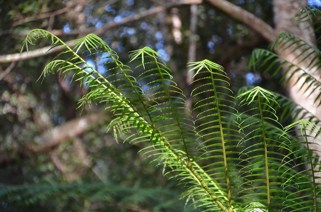 Lava Tree State Park (DSC_4081)