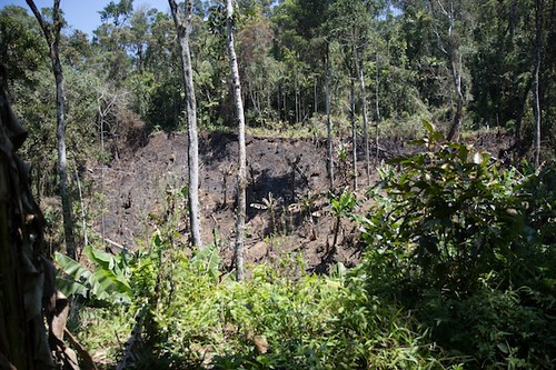 Madagascar - secondary forest, and forest after/during slash and burn agriculture.