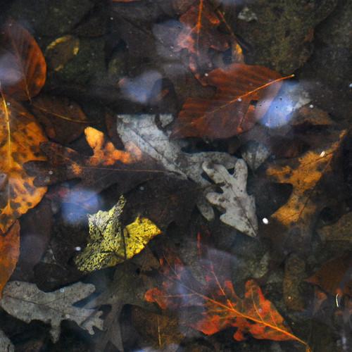 autumn color colour fall colors leaves season colours adventure spillway anautumnwalk