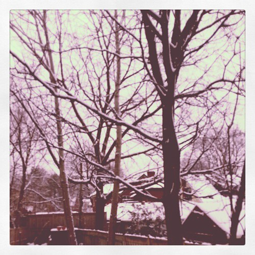 Day 5 #projectlife365 #view - The view from my back door.