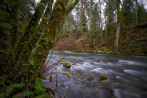 longexposure trees motion blur nature water horizontal canon river washington moss rocks stream wideangle pacificnorthwest flowing ferns pnw noble cedarrivertrail canoneos7d bwnd10xfilter tamronspaf1024mmf3545diiildaspherical