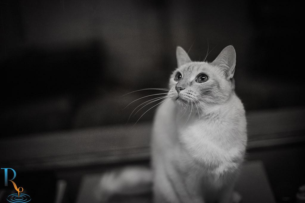 ~ 13/365 Nahla Pearl ~