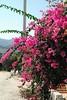 Kreta 2007-2 108
