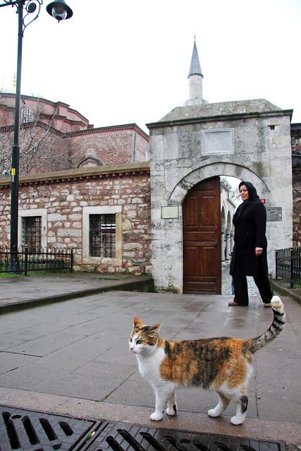 A cat walking around Little Hagia Sophia, Istanbul, Turkey イスタンブール、キュチュック・アヤソフィア前のネコ